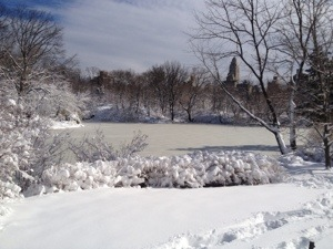 This is Central Park a couple of weeks ago after the beautiful snow storm. There is nothing so beautiful as Central Park after it snows.