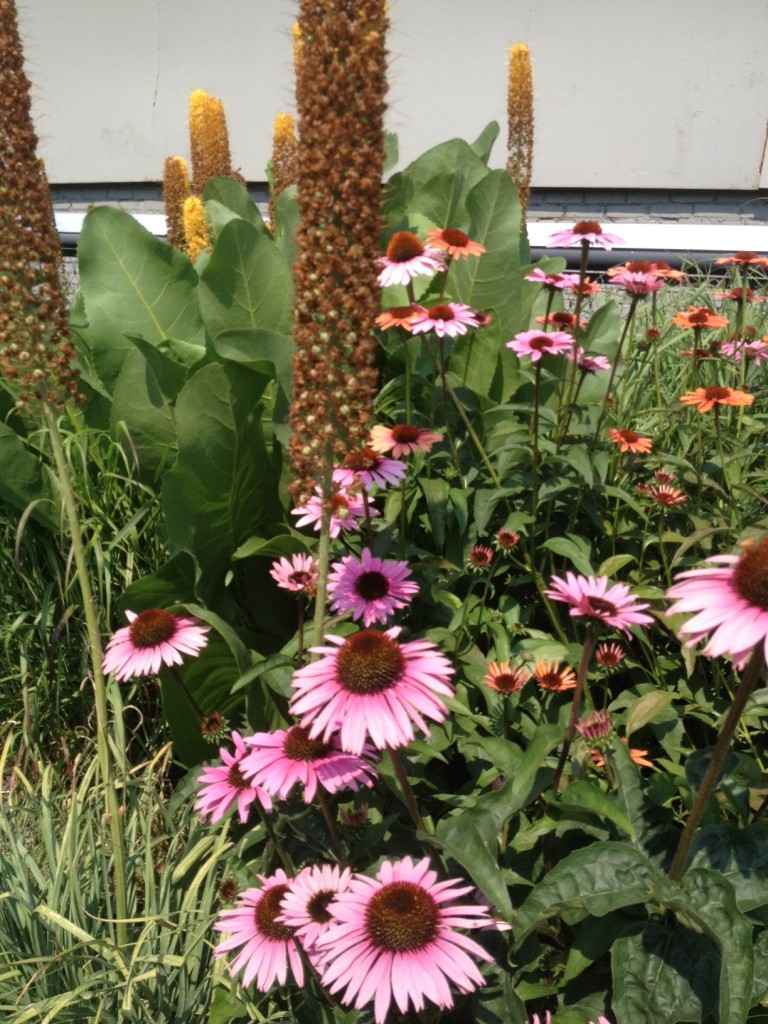 The flowers on the High Line are lovely.