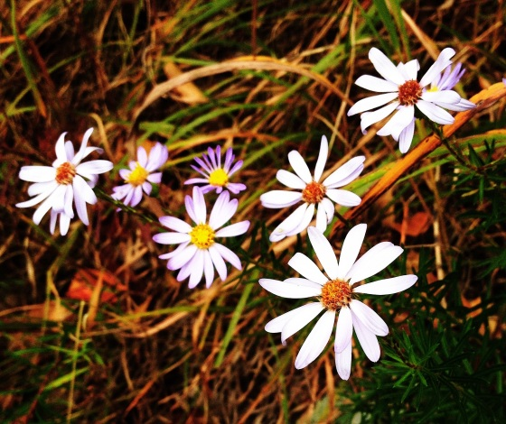 "On an autumn walk, these wildflowers said, ""Hello. We are still beautiful."""