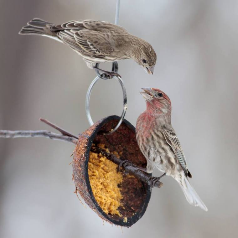 A couple of finches near the birdfeeder in Central Park